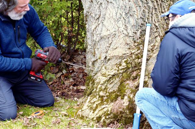 Certification en foresterie urbaine